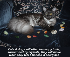 How To Holistically Treat A Cat S Allergies
